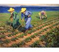 Рабочие на сбор обощей - Сельское хозяйство, агробизнес в Красногвардейском