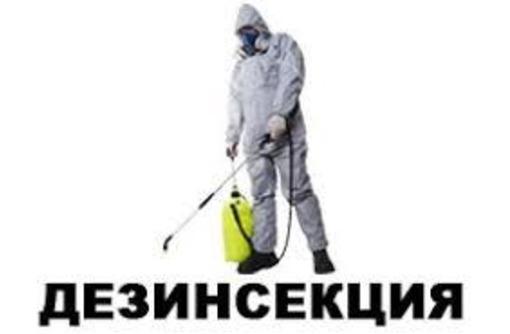 Дезинсекция   Дезинфекция. 100% уничтожение насекомых, грызунов и микроорганизмов - Клининговые услуги в Белогорске