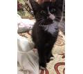 Котёнок ищет дом - Кошки в Севастополе