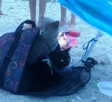 Пропал кот - Кошки в Черноморском
