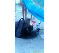 Пропал кот - Кошки в Крыму