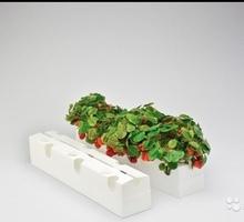 Лотки под клубнику - Саженцы, растения в Симферополе