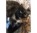 Кошка в добрые руки - Кошки в Севастополе