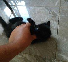 Отдам в добрые руки чудесного котенка - Кошки в Севастополе