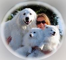 Ищу семейную пару для постоянной работы с собаками с проживаем в Спб - Сервис и быт / домашний персонал в Черноморском