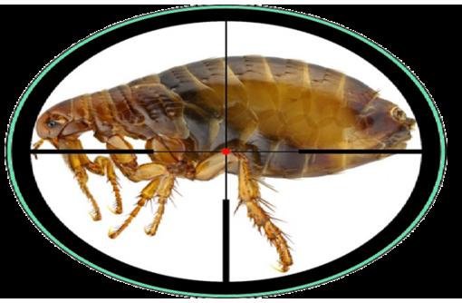 Уничтожение насекомых, фото — «Реклама Севастополя»