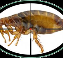 Уничтожение насекомых - Клининговые услуги в Севастополе