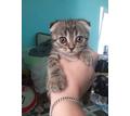 Отдам вислоухих котят в добрые руки - Кошки в Севастополе