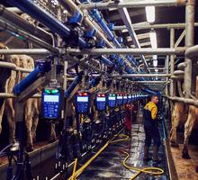 Технологическое оборудование для молочно-товарных ферм и сельскохозяйственных комплексов - Продажа в Бахчисарае