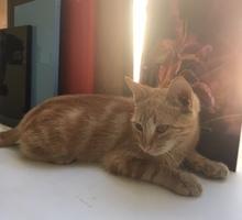 самый ласковый котенок ищет дом - Отдам в добрые руки в Севастополе