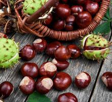Продам плоды конского каштана, сбор 2020 года. - Эко-продукты, фрукты, овощи в Севастополе