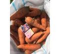 Морковь Абако - Эко-продукты, фрукты, овощи в Красногвардейском