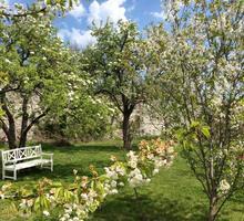 15 соток эксклюзивно выровненного старого сада , в центре Краснокаменки.ИЖС - Участки в Гурзуфе