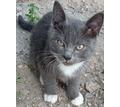 Отдаем 3-х котят в хорошие руки - Кошки в Крыму