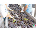 Разнорабочий на переработку винограда - Сельское хозяйство, агробизнес в Крыму