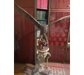 Продам  орла со съемными крыльями материал дерево (ручная работа) - Предметы интерьера в Симферополе