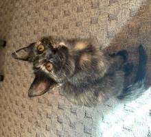 Котёнок в добрые руки - Кошки в Севастополе