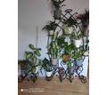 Металлические подставки под цветы, г. Севастополь - Ландшафтный дизайн в Севастополе