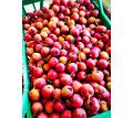 Боярышник, плоды - Эко-продукты, фрукты, овощи в Симферополе