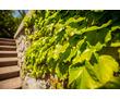 Озеленение территории. Ландшафтный дизайн в Крыму: проектирование, реализация, уход.Видеоролик-бонус, фото — «Реклама Алупки»