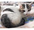 Малышка с улицы ищет дом - Кошки в Симферополе