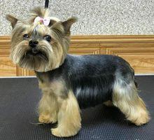 Стрижка, тримминг собак всех пород - Груминг-стрижки в Крыму