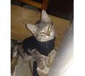 Подарю двух очаровательных котят - Кошки в Севастополе
