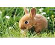 Круглосуточная ветеринарная помощь 24/7 ( по Крыму) !, фото — «Реклама Симферополя»