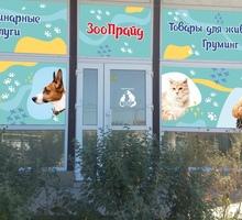 Ветеринарные услуги в Симферополе - «ЗооПрайд»: с заботой о ваших домашних любимцах! - Ветеринарные услуги в Крыму