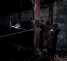 Животные бык и телка на мясо - Бюро находок в Старом Крыму