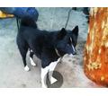 Помогите найти собаку! - Бюро находок в Севастополе