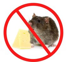Уничтожение крыс и мышей в Квартире - Клининговые услуги в Ялте