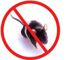 Обработка от крыс - Клининговые услуги в Крыму