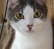Отдам молодую кошечку - Кошки в Севастополе