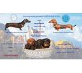 продам миниатюрную тигровую таксу - Собаки в Симферополе