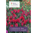 Тюльпаны оптом - Саженцы, растения в Севастополе