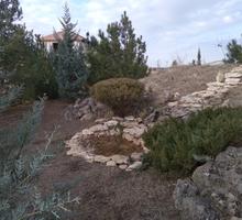 Саженцы хвойников - Саженцы, растения в Симферополе