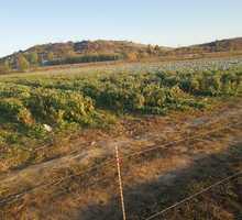 Продам в Крыму в Бахчисарайском районе 2 смежных земельных участка сельскохозяйственного назначения - Участки в Бахчисарае