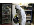 Уничтожение насекомых, грызунов, кротов, ос, неприятного запаха, дезинфекция в Форосе – «DEZHome», фото — «Реклама Фороса»