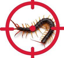 Уничтожение сколопендры - Клининговые услуги в Евпатории