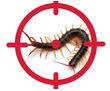Уничтожение сколопендры, фото — «Реклама Евпатории»
