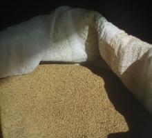 Семена люцерны - Саженцы, растения в Джанкое