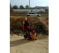 Дрессировка собак в Севастополе - Дрессировка, передержка в Севастополе