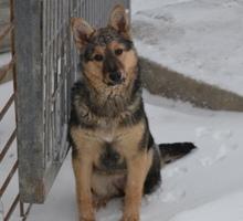 Собака в хорошие руки - Собаки в Симферополе