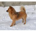 Собачки в добрые руки - Собаки в Симферополе