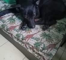 Молодая, очень красивая собака. Возможно и кто-то потерял - Отдам в добрые руки в Евпатории