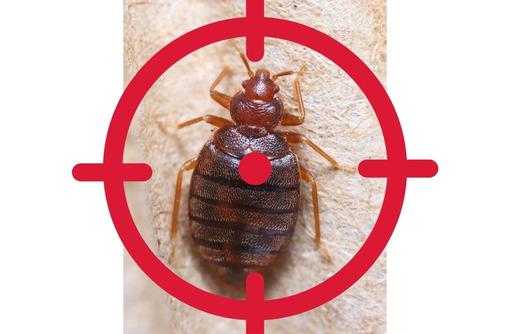 Обработка тараканов с гарантией до 1 года АЛУПКА, фото — «Реклама Алупки»