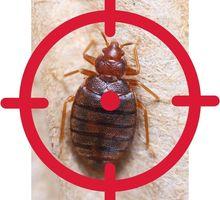 Обработка тараканов с гарантией до 1 года АЛУПКА - Клининговые услуги в Алупке