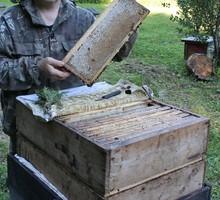 Продам качественный мед - Пчеловодство в Симферополе