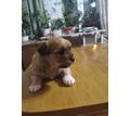 отдам в добрые руки - Собаки в Севастополе